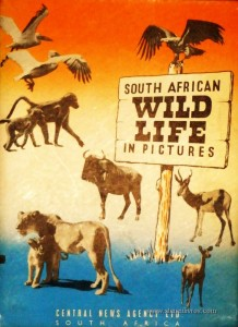 South African Wild Life in Pictures